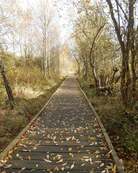 Lattersey Nature Reserve Whittlesey the walkway in Autumn