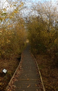 The boardwalk in autumn