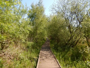 The boardwalk in spring