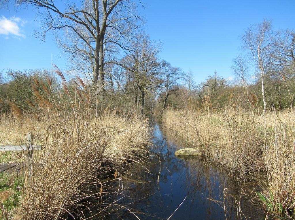 Wood Walton Fen Nature Reserve