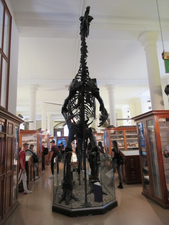 Dinosaur skeleton at the Sedgewick Museum